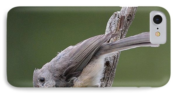 Tufted Titmouse Phone Case by Todd Hostetter