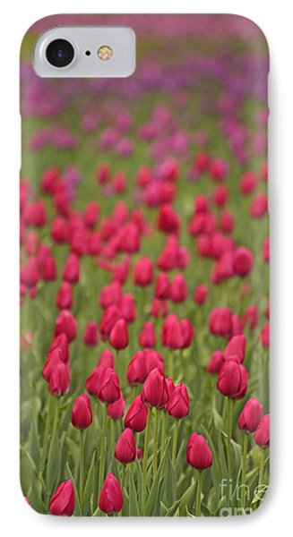 Tulip Beds Forever IPhone Case