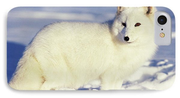 Usa, Alaska Arctic Fox In Winter Coat IPhone Case by Jaynes Gallery