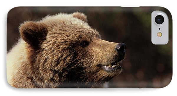 Usa, Alaska, Grizzly Bear, Denali IPhone Case by Gerry Reynolds