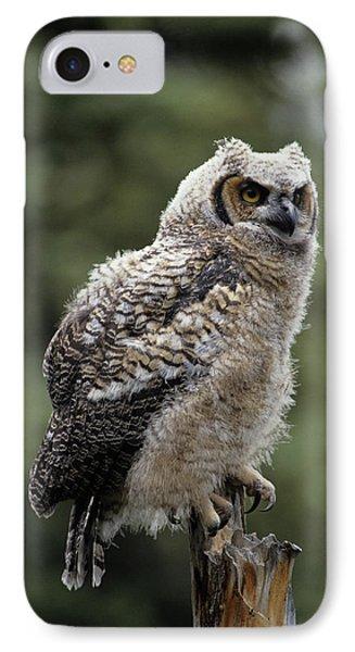 Usa, Alaska, Juvenile Great Horned Owl IPhone Case by Gerry Reynolds