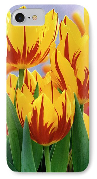 Usa, Indiana, Indianapolis IPhone Case by Jaynes Gallery
