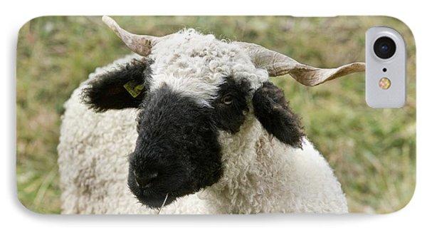 Valais Blacknose Sheep Grazing IPhone Case