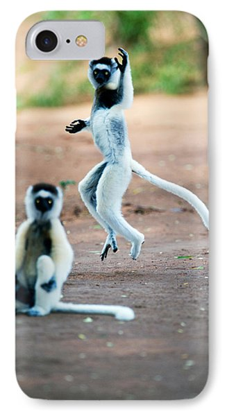 Verreauxs Sifaka Propithecus Verreauxi IPhone Case by Panoramic Images