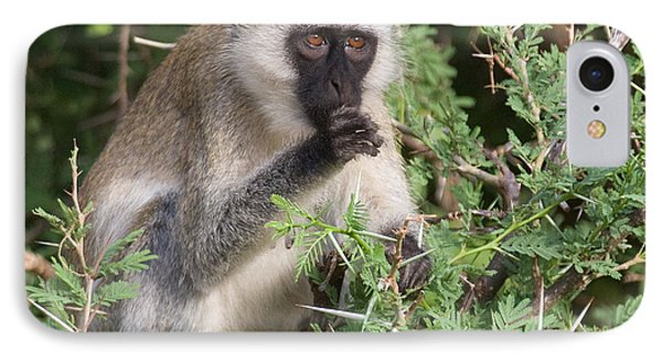 IPhone Case featuring the photograph Vervet Monkey by Chris Scroggins