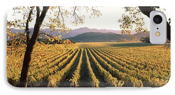 Vines In A Vineyard, Far Niente Winery IPhone Case by Panoramic Images