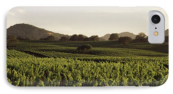 Vineyard With Mountains IPhone Case by Panoramic Images
