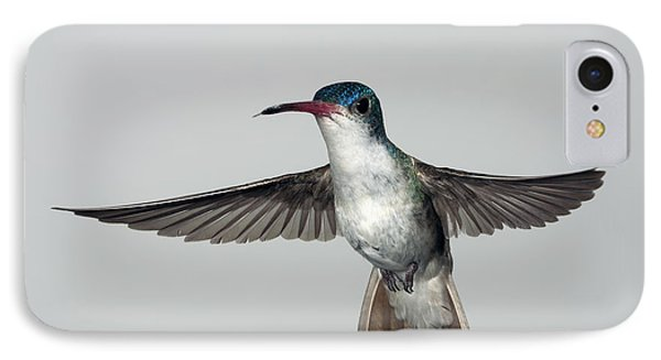 Violet-crowned Hummingbird IPhone Case by Gregory Scott