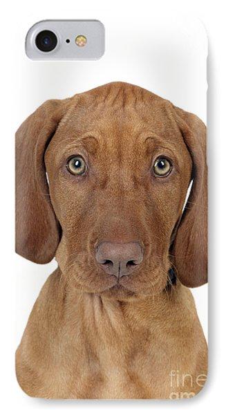 Vizsla Puppy Dog IPhone Case by John Daniels