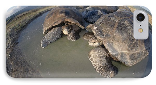 Volcan Alcedo Giant Tortoises Wallowing IPhone Case by Tui De Roy