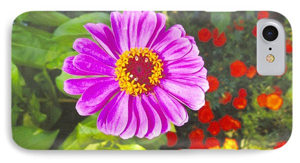 Warm Pink Zinnia IPhone Case by Rod Ismay