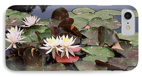 Water Lilies In A Pond, Sunken Garden IPhone Case by Panoramic Images