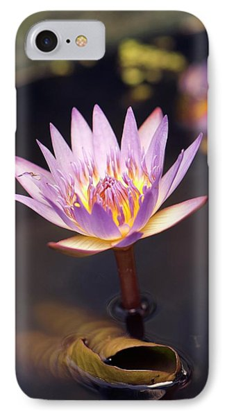 Waterlily (nymphaea Capensis) Flower IPhone Case