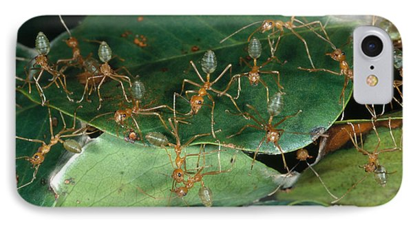Weaver Ants IPhone Case by Gregory G. Dimijian, M.D.