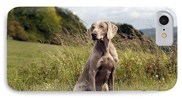 Weimaraner Dog IPhone Case by John Daniels