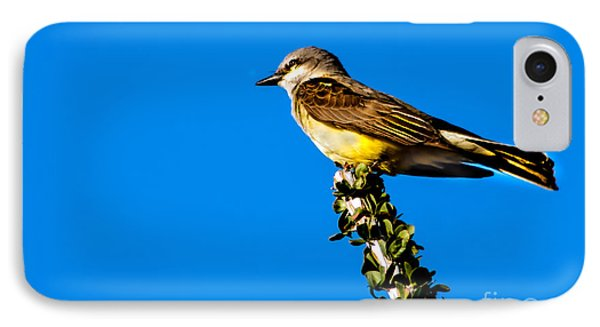 Western Kingbird Phone Case by Robert Bales