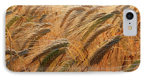 Wheat IPhone Case by A K Dayton