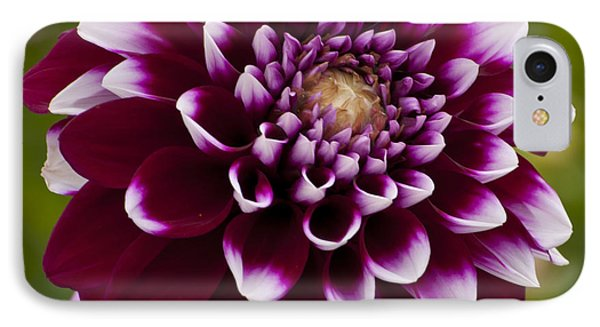 White And Purple Dahlia Phone Case by Mandy Judson