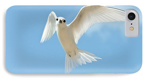 White Tern (gygis Alba Rothschildi IPhone Case by Daisy Gilardini