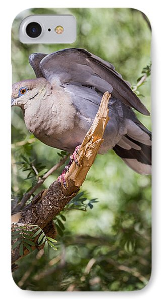 IPhone Case featuring the photograph White-winged Dove by Beverly Parks