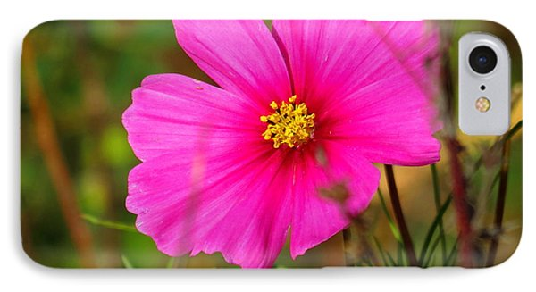 IPhone Case featuring the photograph Wild Flower by Eric Switzer