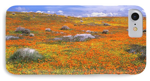 Wildflowers At The California Poppy IPhone Case by John Alves