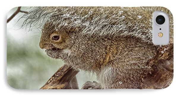 Winter Squirrel Phone Case by LeeAnn McLaneGoetz McLaneGoetzStudioLLCcom