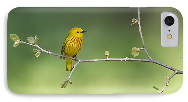 Yellow Warbler IPhone Case by Daniel Behm