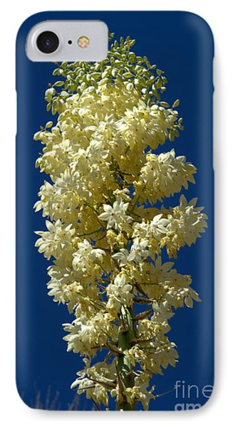 Yucca In Bloom IPhone Case by Jane Axman