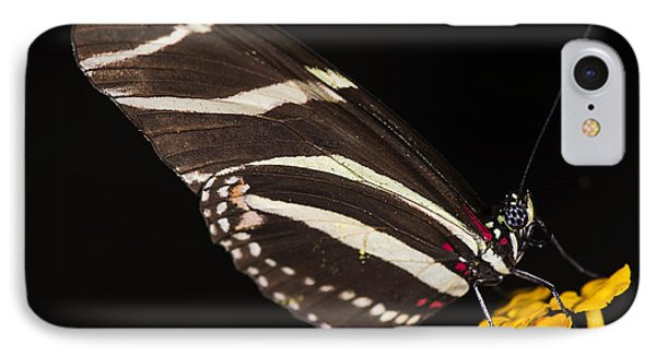 Zebra Longwing IPhone Case by JT Lewis