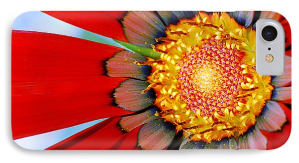 Zinnia In Red IPhone Case by Wendy Wilton