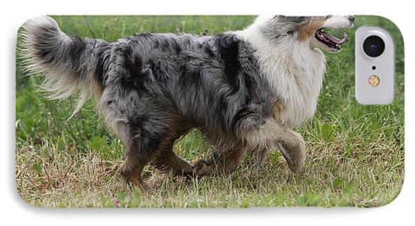 Australian Shepherd Dog IPhone Case by Jean-Michel Labat