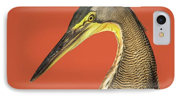 Bare-throated Tiger Heron Tigrisoma IPhone Case