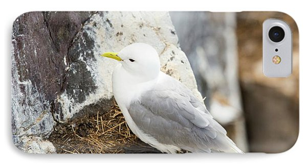 Black Legged Kittiwake IPhone Case