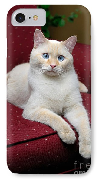 Flame Point Siamese Cat Phone Case by Amy Cicconi