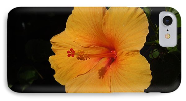 Hibiscus IPhone Case by Ron Davidson