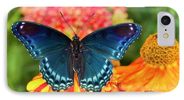 Red-spotted Purple Butterfly, Limenitis IPhone Case by Darrell Gulin