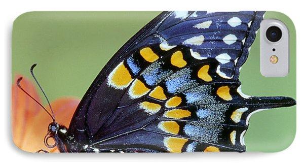 Eastern Black Swallowtail Butterfly Phone Case by Millard H. Sharp