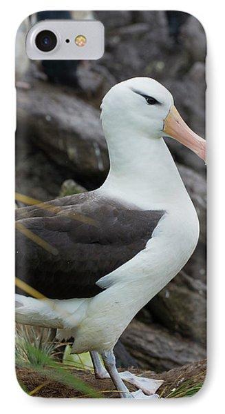 Albatross iPhone 7 Case - Falkland Islands by Inger Hogstrom