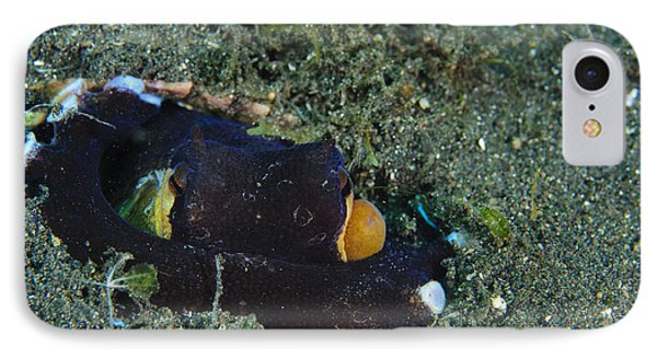 A Coconut Octopus, Lembeh Strait Phone Case by Steve Jones