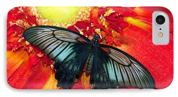 Butterfly IPhone Case by Tam Ryan