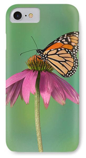 Monarch Butterfly, Danaus Plexippus IPhone Case by Darrell Gulin