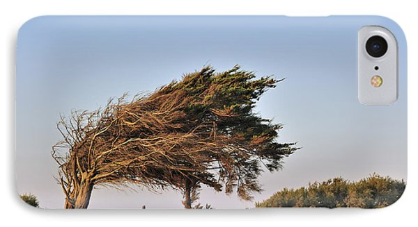 IPhone Case featuring the photograph 120920p153 by Arterra Picture Library