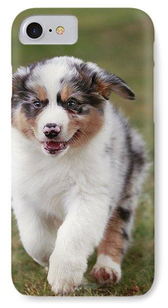 Australian Shepherd Puppy IPhone Case by Jean-Michel Labat