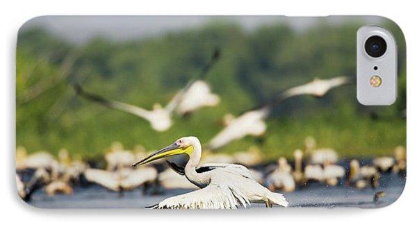 Great White Pelican (pelecanus IPhone Case by Martin Zwick