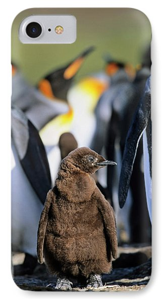 King Penguin (aptenodytes Patagonica IPhone Case by Martin Zwick