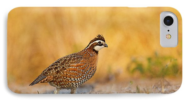 Northern Bobwhite (colinus Virginianus IPhone Case by Larry Ditto