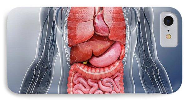 Human Internal Organs IPhone Case