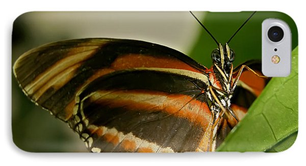 IPhone Case featuring the photograph Butterfly by Olga Hamilton