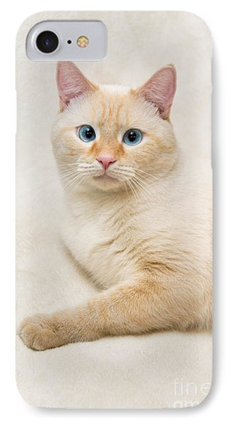 Flame Point Siamese Cat IPhone Case by Amy Cicconi